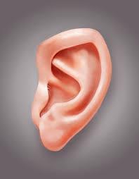 الأذن الوسطى وإلتهابها